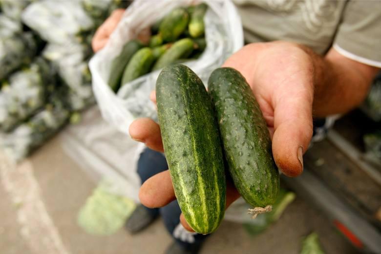 Udawali handlarzy ogórków. Pod warzywami wieźli marihuanę wartą 10 mln zł