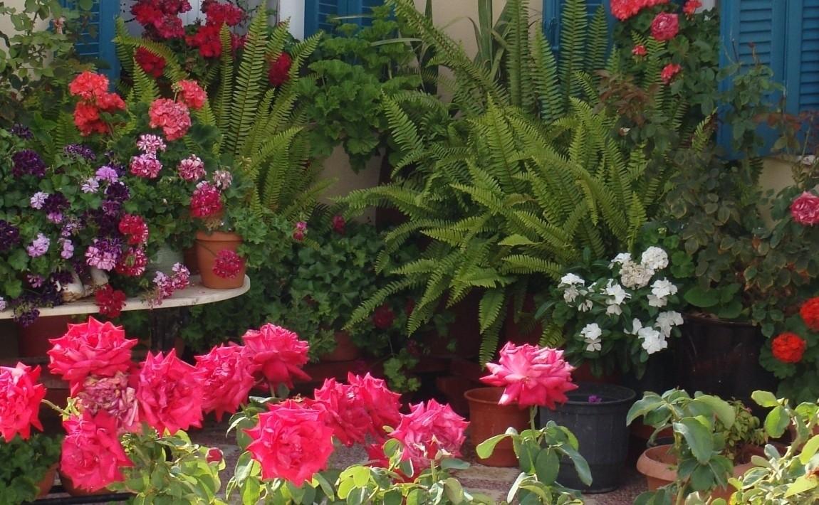 Zakładamy ogród w stylu śródziemnomorskim - poranny.pl
