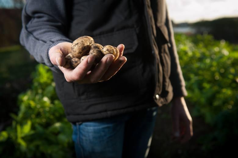 Warzywa stają się towarem luksusowym. Są coraz droższe. W ciągu dwóch lat cebula zdrożała o 60 proc., ziemniaki - o 55 proc.