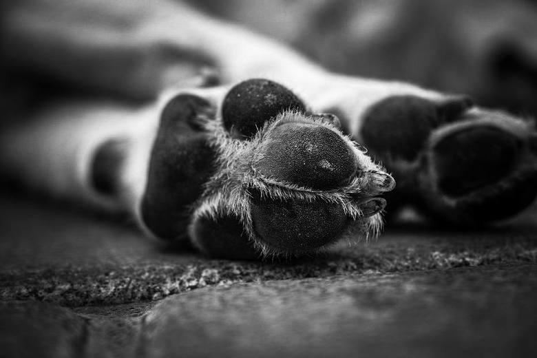 """Dwaj mieszkańcy z gm. Sadlinki zabili psa ze szczególnym okrucieństwem """"bo zagryzł trzy kury"""". Zostali zatrzymani przez policję"""