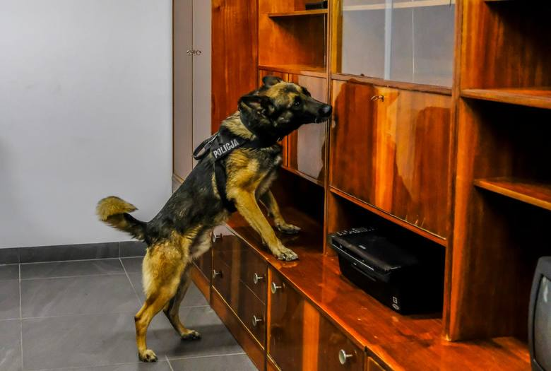 Policyjne psy i konie, które zakończa pracę w służbach mundurowych będą miały zagwarantowaną dożywotnią opiekę. Rząd przyjął projekt ustawy regulującej