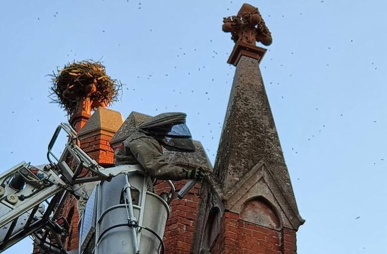 Sceny, jak z katastroficznego filmu ,,Rój'' z 1978 r. rozegrały się w Chycinie, kiedy chmara pszczół rozlokowała się w centrum wsi