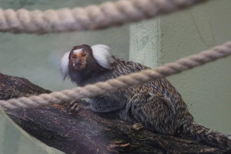 Zoo z własnymi strażnikami? To pierwszy taki projekt w Polsce