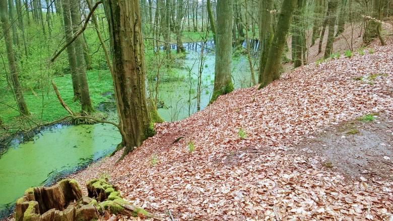 Ostaniec leży pośrodku pradawnego zalewu szerokiego w tym miejscu na 2 km, którego brzegi usiane są stanowiskami archeologicznymi z różnych epok.