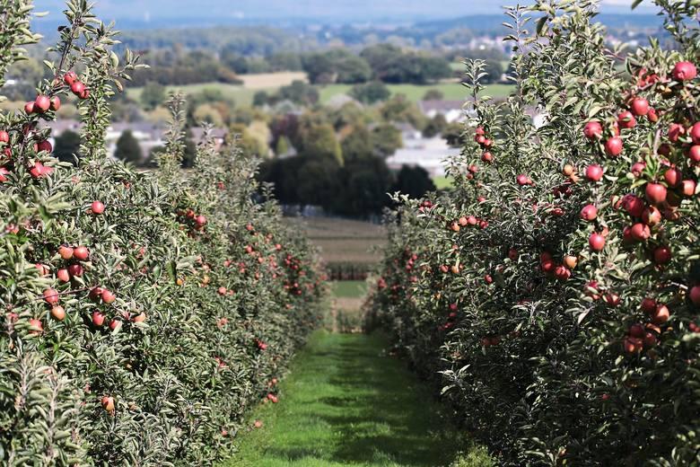 Przydomowy ogródek coraz rzadszy w krajobrazie wsi. Jest w co czwartym gospodarstwie