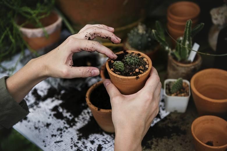 Rośliny nie tylko wyglądają pięknie i sprawiają, że dom jest bardziej przytulny, ale również oczyszczają powietrze. To bardzo ważne, szczególnie zimą,