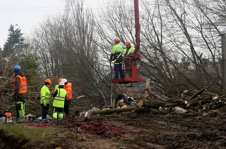 W związku z budową węzła Łękno postępuje wycinka drzew w tej okolicy. Mieszkańcy i obrońcy przyrody mówią o prawdziwej rzezi, która nieodwracalnie zmieni
