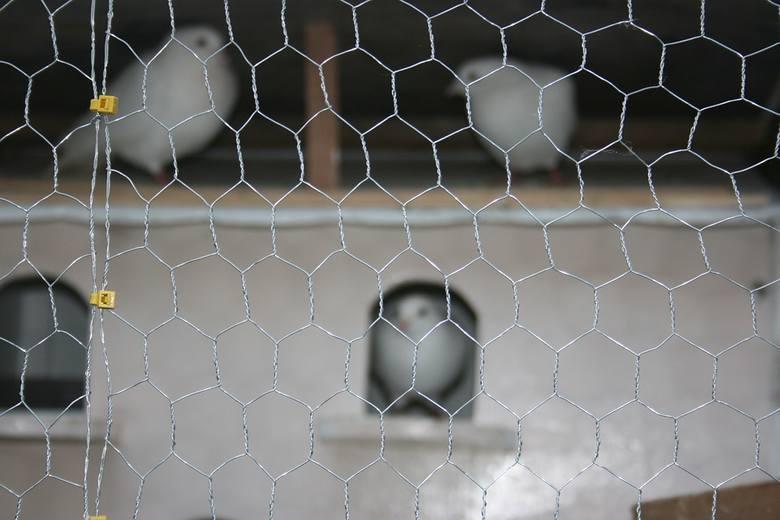 Siatki ochronneW marketach budowlanych i sklepach internetowych pełno jest ofert siatek, które mogą ochronić balkony przed wizytą niechcianych gołębi.Problem