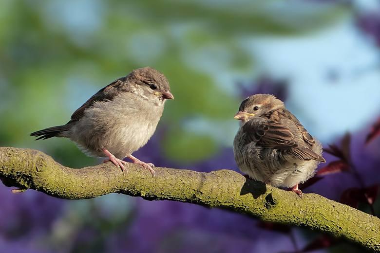 Proponujemy Wam krótki wykaz ptasich terapeutów. Możecie sobie wybrać skrzydlatego lekarza