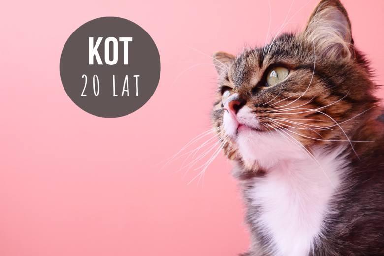 Koty niewychodzące żyją znacznie dłużej niż te uliczne. W warunkach domowych potrafią osiągnąć wiek 20 lat.