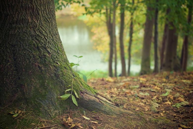 Peter Wohlleben w książce Sekretne życie drzew opisuje różne drzewne strategie pozwalające przetrwać gatunkowi. Jedną z nich jest wzajemna komunikacja.