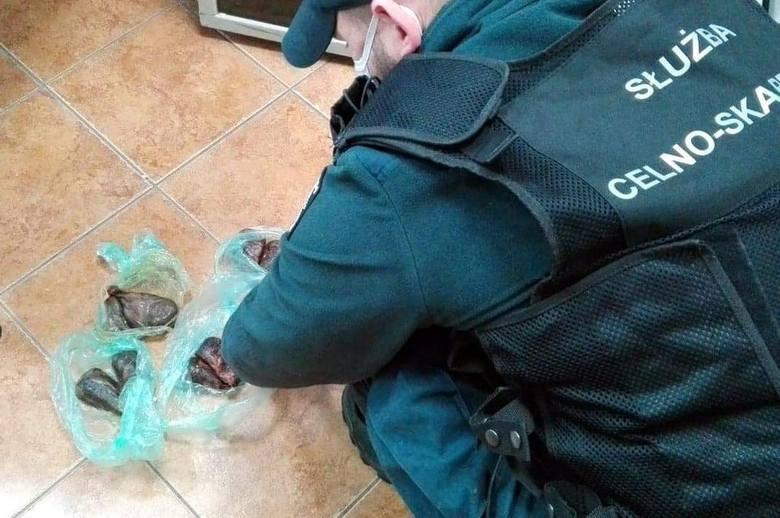 Białorusin próbował przemycić gruczoły bobra europejskiego (zdjęcia)