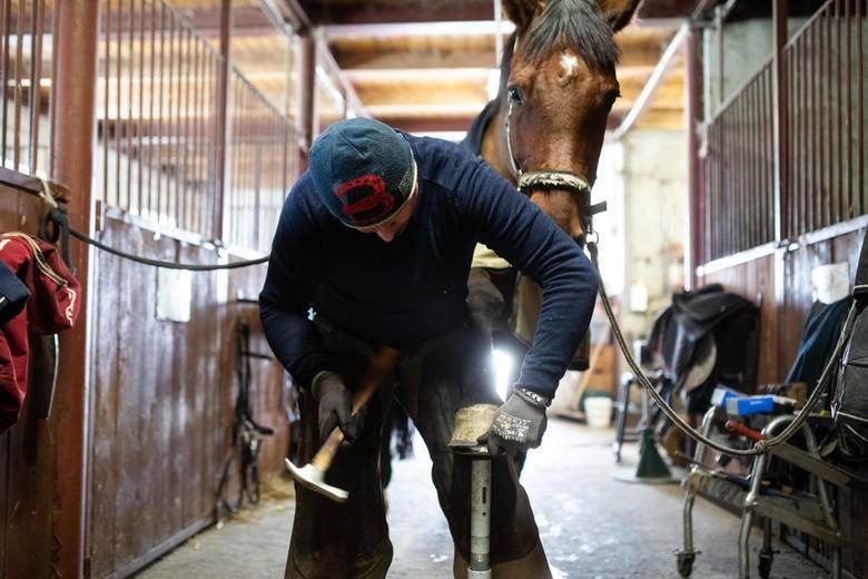 Podkuwacz koni: im więcej w życiu podków, tym więcej szczęścia!