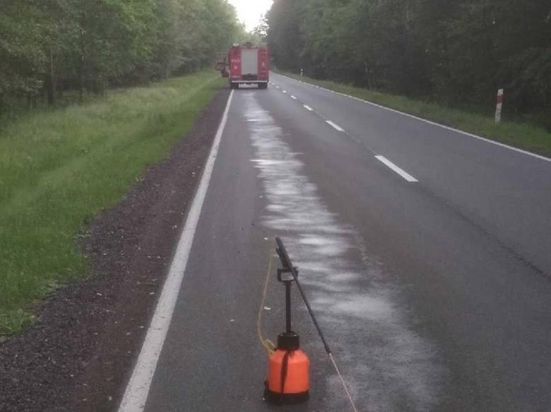 Kolizja koło Trzebielina na drodze krajowej nr 21. Samochód uderzył w dzika. Zwierzę nie przeżyło.