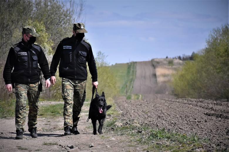MSWiA przygotowało projekt ustawy o dożywotniej opiece dla zwierząt pracujących w służbach.