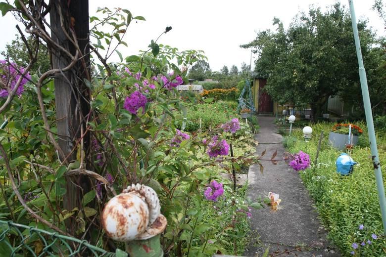 KWIECIEŃTo ostatni moment na cięcia sanitarne oraz prześwietlające drzew i krzewów owocowych. Zróbmy to, a rośliny odwdzięczą się nam lepszym kwitnieniem.