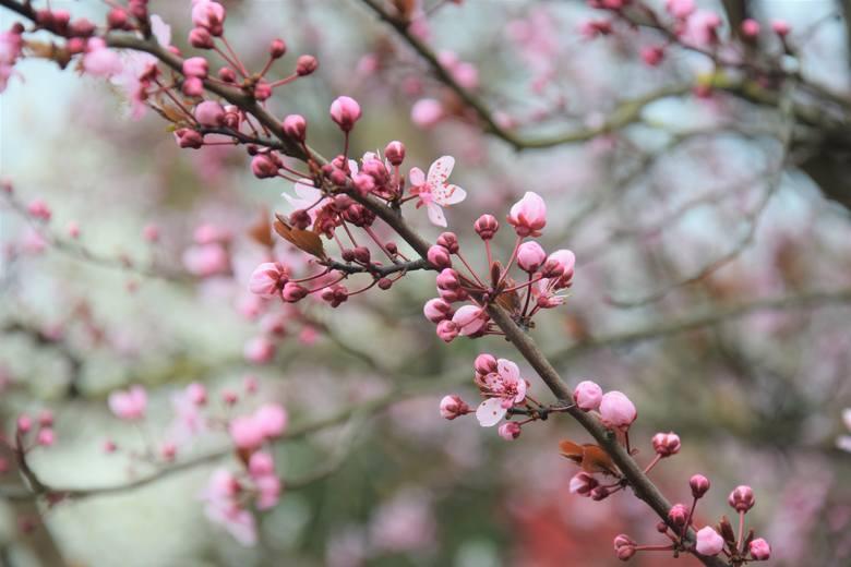 Dziś, 20 marca, przypada pierwszy dzień astronomicznej wiosny! Po długiej zimie, to zawsze najbardziej wyczekiwana pora roku.  Od kilku dni pogoda dopisywała,