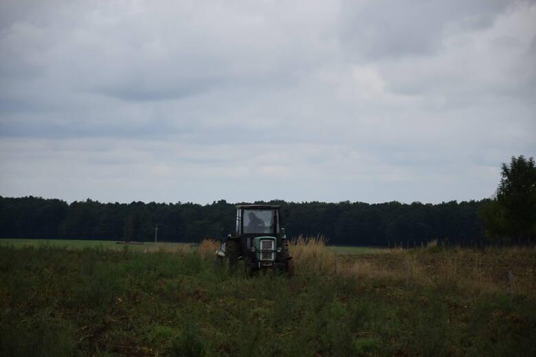 Władza wytrzebiła dziki. Rolnicy się cieszą ze zbiorów