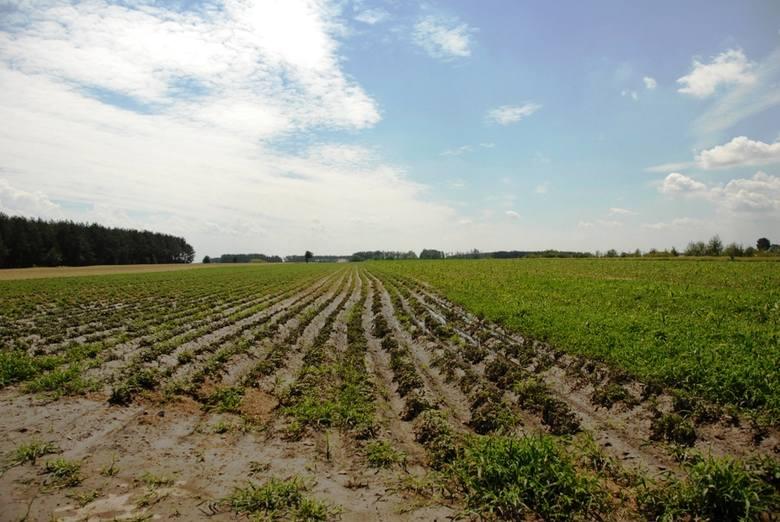 Pogoda powoduje straty na polach. Na jaką pomoc można liczyć? [procedura]