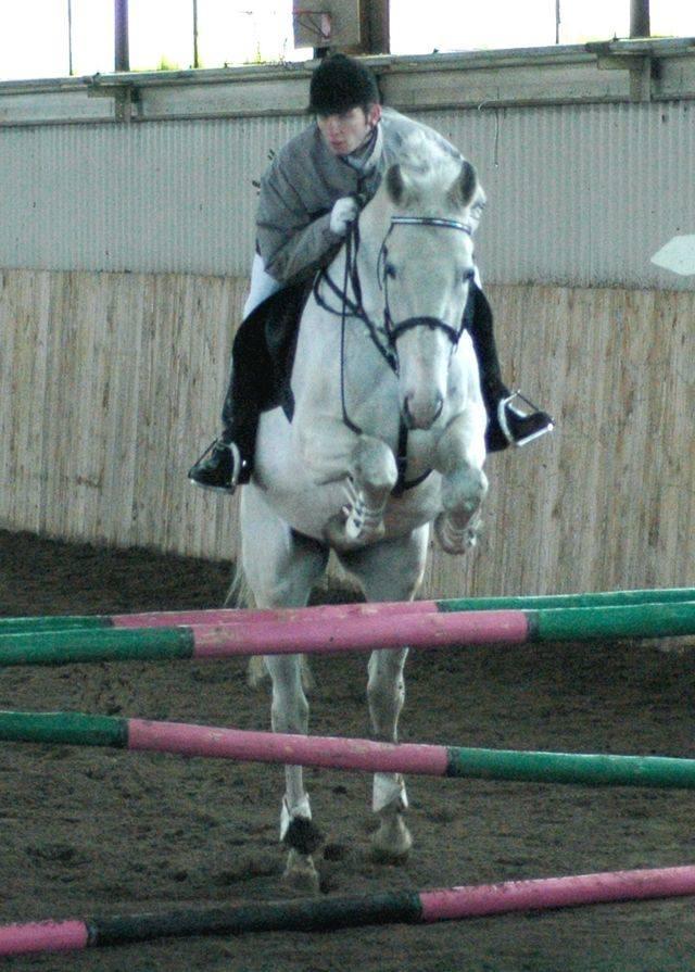 Jeździectwo: halowe skoki w Grzybowie