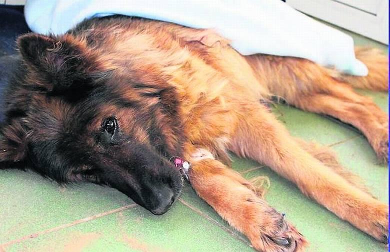 Złapali zwyrodnialca, który zakopał psa żywcem!