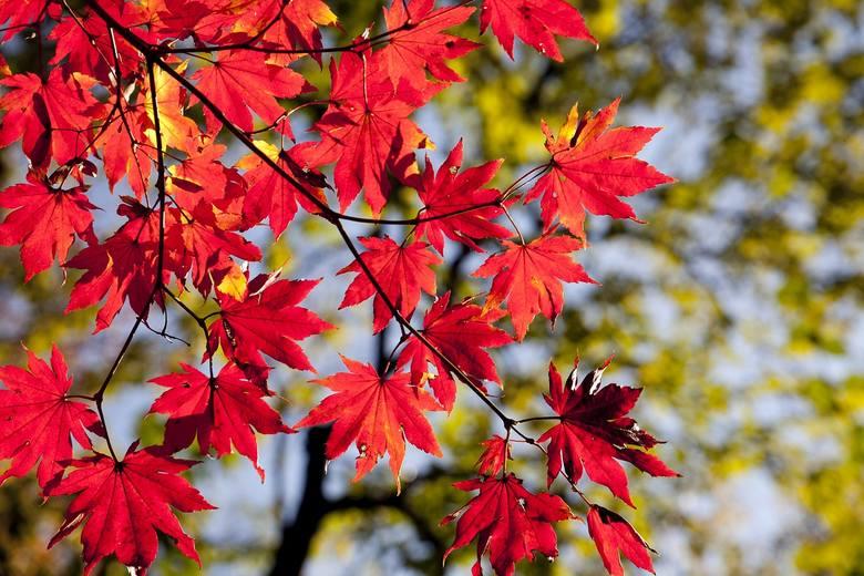 Jaka pogoda czeka nas jesienią? Prognoza pogody długoterminowej na wrzesień i październik.
