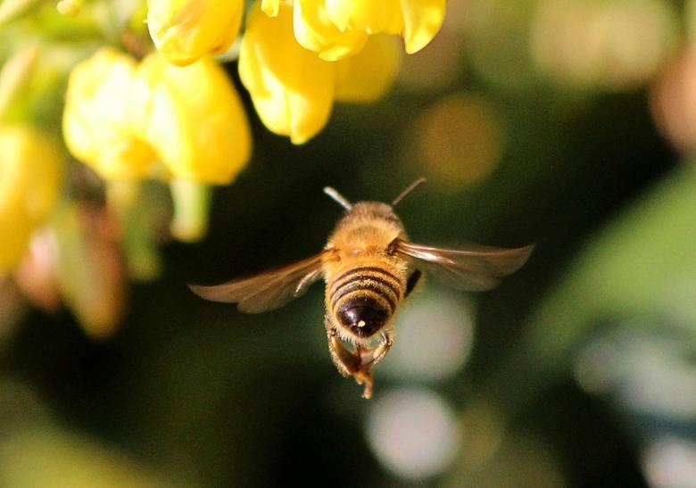 Trwa sezon, w którym owady mogą nam dokuczać, wpadając do mieszkań i pojawiając się na balkonach czy w ogrodach. To właśnie w lecie jest ich najwięcej.