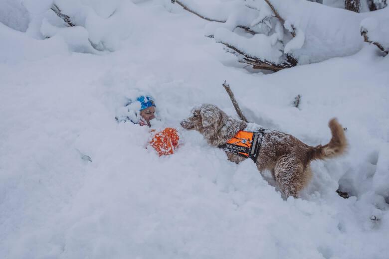 Psy ratownicze są nieocenionym partnerem w akcjach GOPR