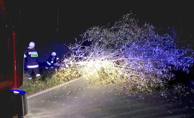 Strażakom z OSP w Gostwicy pobudkę nocnym alarmem urządziły... bobry