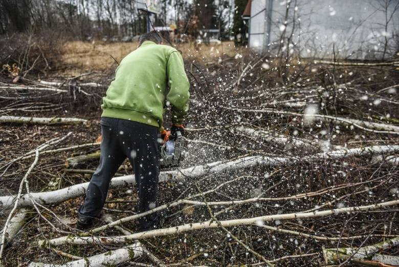 Zmiany PiS przegłosowane przez Sejm mają ograniczyć dziką samowolę w wycince drzew, która ma miejsce od 1 stycznia.