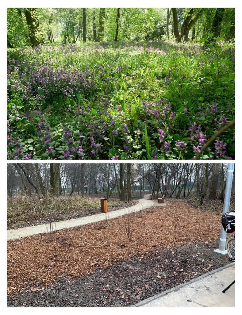 Park Wilgi na wiosnę 2020, przed rewitalizacją, i późną jesienią 2020, już po I etapie prac