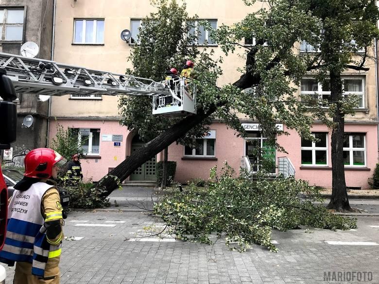 Wiatr łamie drzewa i uszkadza budynki.