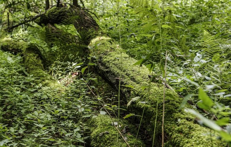 Rezerwat przyrody Mójka znajduje się na terenie wsi Kąkolówka i Futoma. Leży w obrębie Hyżnieńsko-Gwoźnickiego Obszaru Chronionego KrajobrazuZOBACZ TEŻ:
