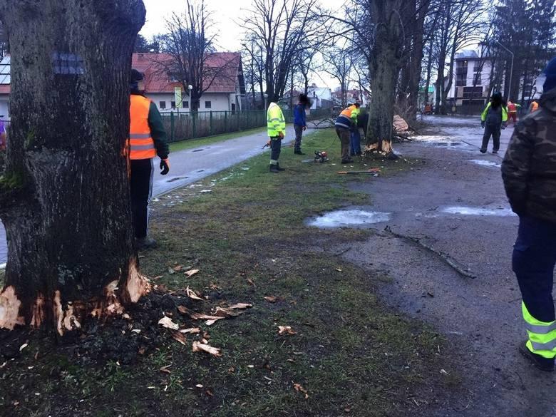 W styczniu w Mielnie ekipa drwali wycięła przydrożne drzewa. Remont drogi zacznie się prawdopodobnie po wakacjach
