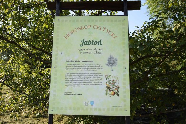 Horoskop celtycki w Lutowiskach - JABŁOŃTo drzewo osób urodzonych w dniach 23 grudnia - 1 stycznia oraz 25 czerwca - 4 lipca.