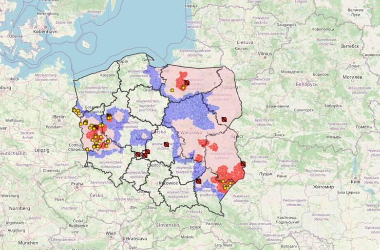 Mapa ASF w Polsce 2021. Branża wskazuje, jak walczyć z afrykańskim pomorem świń. Chce szybkich testów