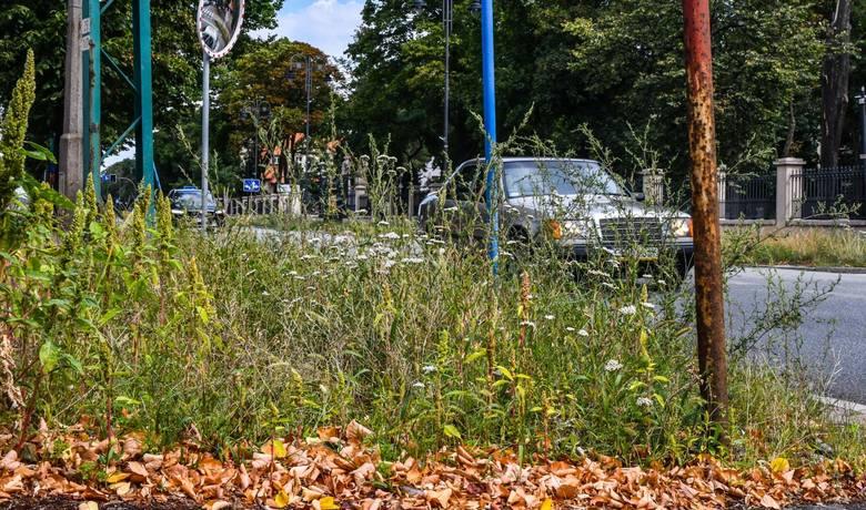 Przy wielu bydgoskich ulicach trawa jest niekoszona od wielu miesięcy.