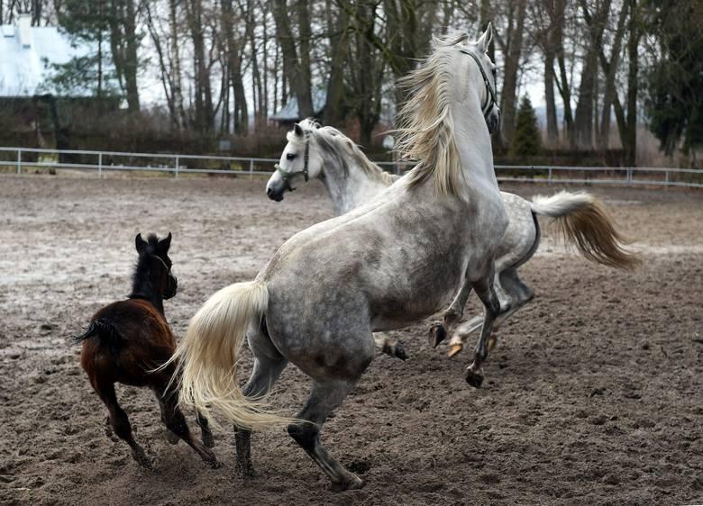 Koń, jaki jest, każdy widzi: miejsce, w którym ciągle jest żywa historia