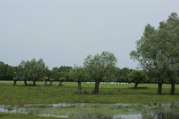 Powódź w Wielkopolsce: Mieszkańcy boją się wielkiej wody [ZDJĘCIA]
