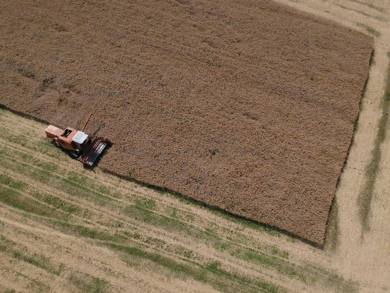 Trwają żniwa na podkarpackich polach. To czas na zebranie plonów całorocznej pracy rolników. Nasz fotoreporter wybrał się z dronem do podprzemyskich