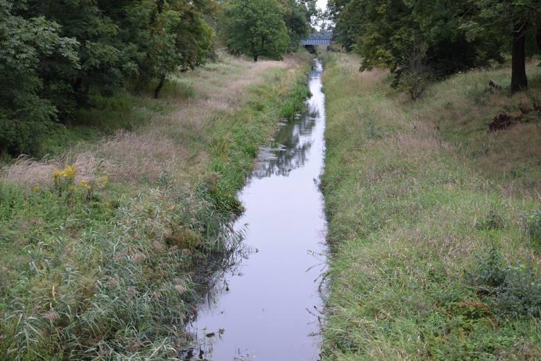 Jest pomysł ratowania Kanału Kłodnickiego. Jeden z najstarszych kanałów w Europie znika na naszych oczach