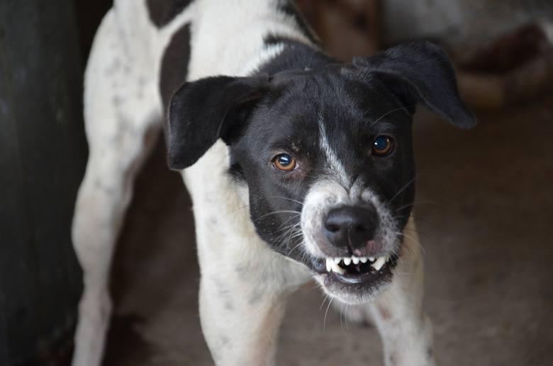 Pamiętajmy, że pies atakuje najczęściej wtedy, gdy czuje się zagrożony. To po stronie rodziców czy opiekunów leży przypilnowanie tego, aby dziecko wiedziało,