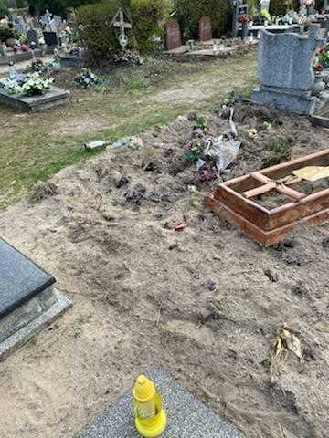 Cmentarz na Junikowie ostatnio upodobały sobie dziki. Biegają między grobami, ale czasami też je przekopują. Wszyscy, którzy wybierają się na cmentarz,