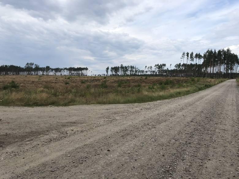 Tak wygląda dziś teren między Suszkiem a Rytlem. Przed nawałnicą, drzewa rosły tu do samej drogi.