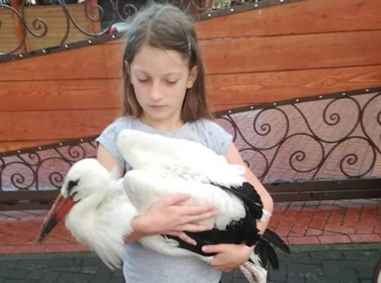 Mała Madzia nie tylko uratowała bociana, ale też nadała mu imię - Stefan.