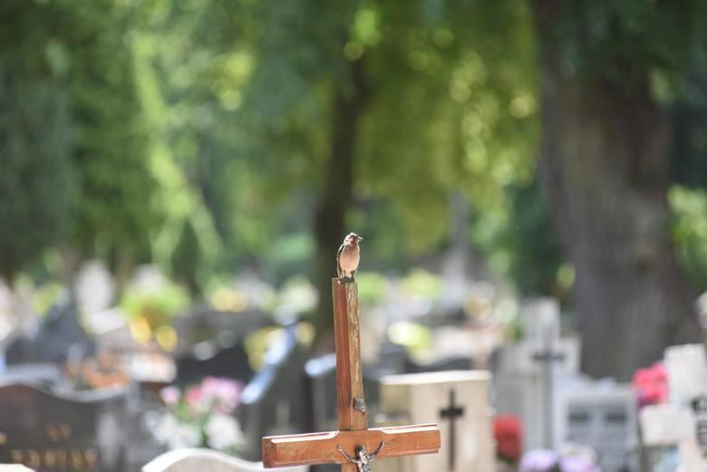 W tym roku podczas Świąt Wielkanocnych nie będziemy mogli odwiedzić najbliższych na cmentarzu w Zielonej Górze