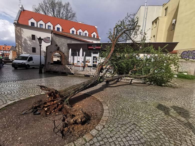 Drzewo na zielonogórskim deptaku zostało powalone przez silny wiatr. Mieszkańcy nie mogą odżałować straty. Każde drzewo na deptaku jest na wagę złot