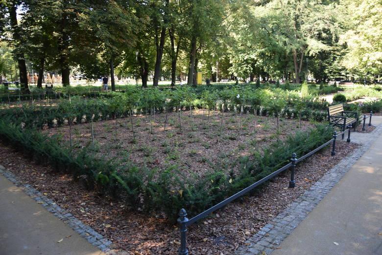 Rewitalizacja parku kosztowała około 8 mln zł i trwała od ubiegłego roku. Powstały tu zupełnie nowe alejki, ogrody kwaterowe, odtworzono staw i wybudowano