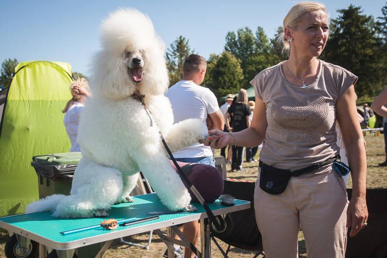 419  psów rasowych  zaprezentowali  w  niedzielę (25 sierpnia) uczestnicy Krajowej Wystawy Psów Rasowych  w Słupsku. Zapraszamy do galerii zdjęć.