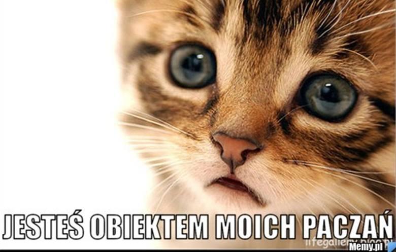 Memy z kotami robią zawrotną karierę w Polsce. Zobacz najlepsze.Zobacz kolejne memy z kotami. Przesuwaj zdjęcia w prawo - naciśnij strzałkę lub przycisk